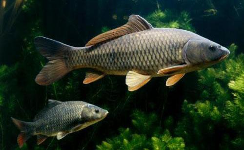 鱼病害的防治方法介绍