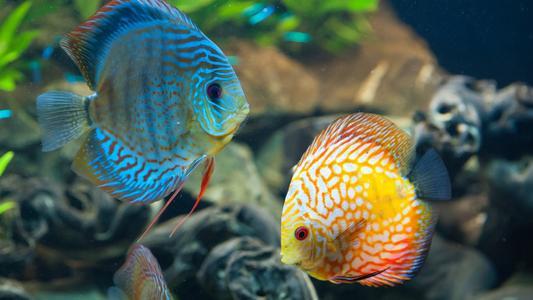 购买观赏鱼饲料应注意什么