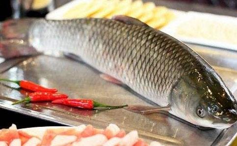 大规格草鱼优良高效养殖技术介绍
