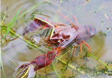 养虾过程中,饲料投喂你掌握了哪些?
