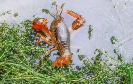 虾的营养价值有哪些?