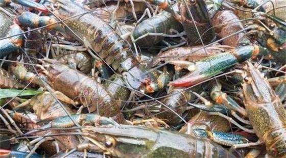 三月虾蟹养殖需要注意哪些问题